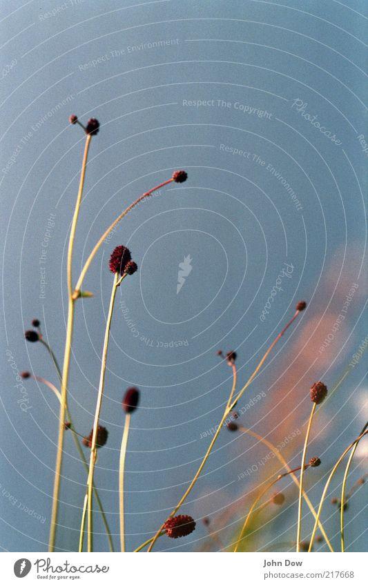 Nature Sky Plant Summer Calm Meadow Blossom Grass Contentment Arrangement Esthetic Growth Uniqueness Natural Analog