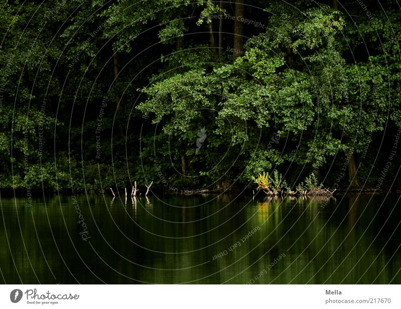 Nature Water Tree Green Plant Calm Leaf Forest Dark Lake Landscape Moody Environment Romance Bushes Mysterious