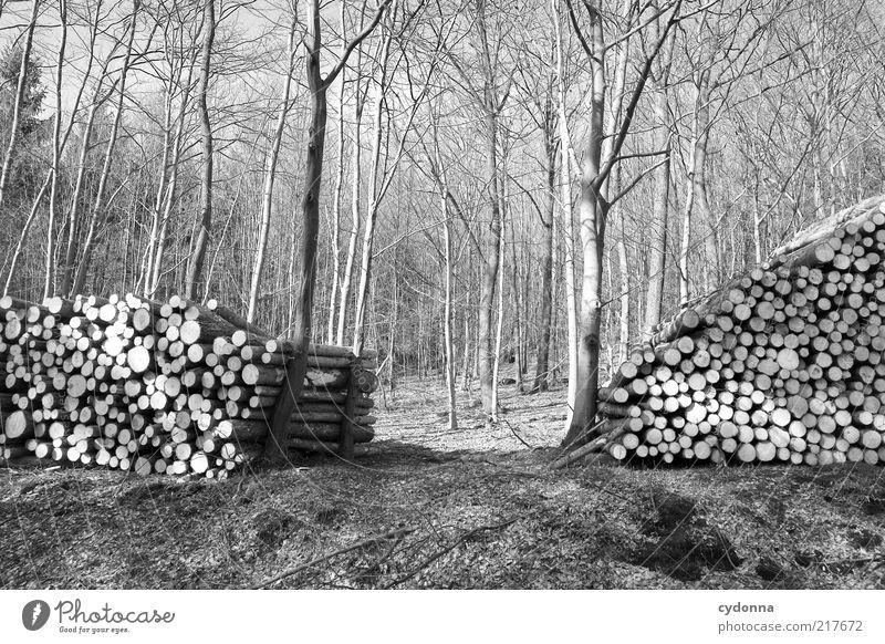 Nature Tree Calm Forest Life Environment Landscape Arrangement Esthetic Help Change Round Transience Stop Protection Creativity