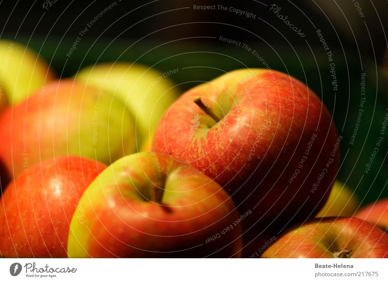 Green Red Life Nutrition Autumn Healthy Fruit Apple Stalk Joie de vivre (Vitality) Delicious Mature Organic produce Diet Quality Vegetarian diet