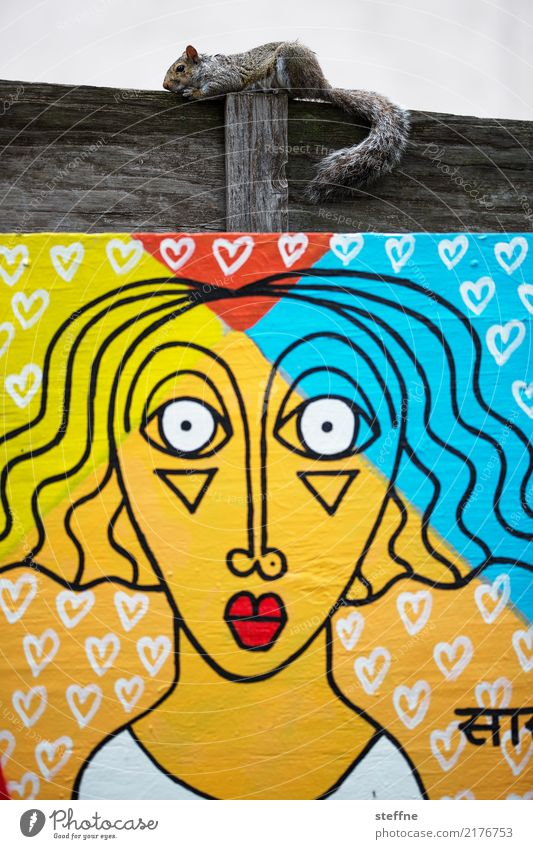 Animals in town 2 1 Town Squirrel Art Graffiti Urban art Woman Face New York City Colour photo Multicoloured Exterior shot