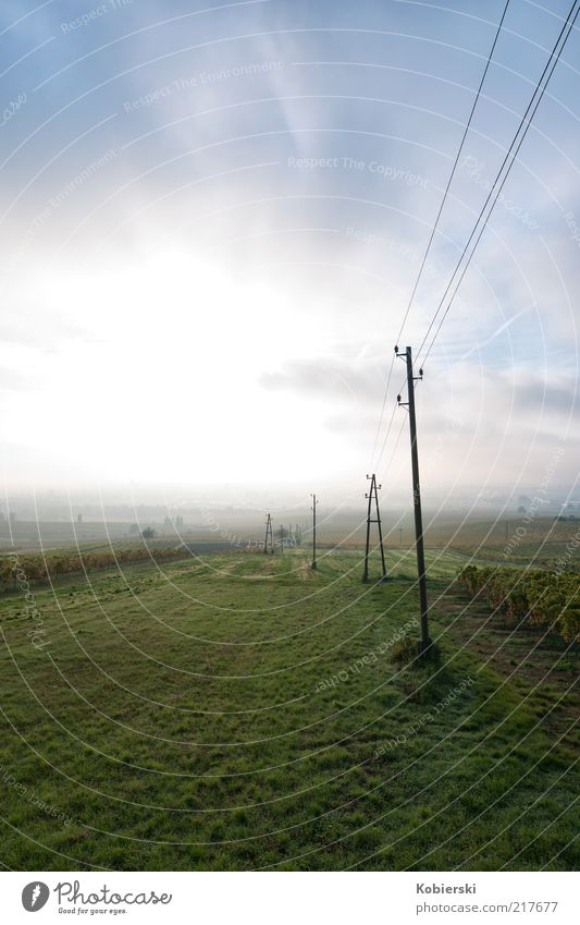 vineyard Wine growing Energy industry Electricity pylon Landscape Clouds Autumn Beautiful weather Fog Vineyard Field Deserted Breathe To enjoy Dream Exceptional