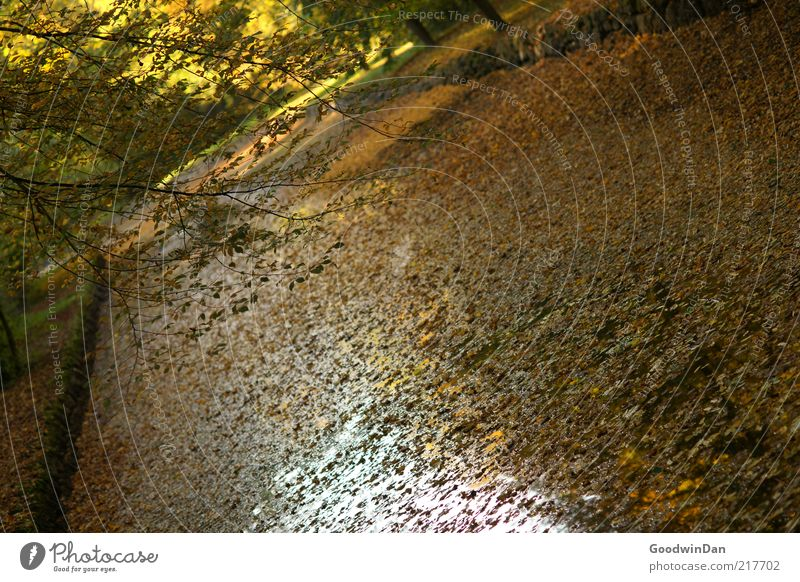 Nature Water Beautiful Leaf Autumn Emotions Park Moody Environment Earth Elements Hang Brook Autumn leaves Float in the water Twigs and branches