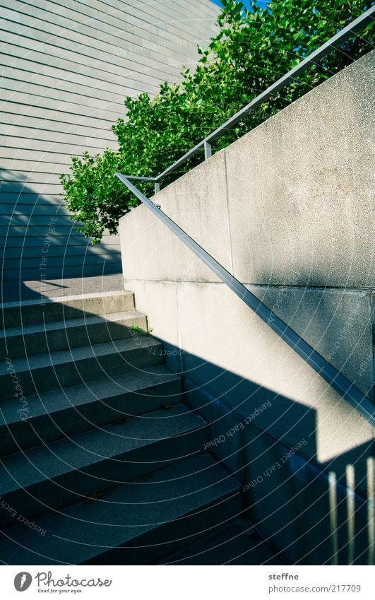 City Green Leaf Concrete Stairs Bushes Dresden Beautiful weather Handrail Saxony Concrete wall Synagogue