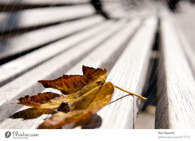 Leaf Loneliness Yellow Autumn Wood Brown Bench To fall Stalk Decline Distress Wood grain Autumn leaves Furniture Autumnal Park bench