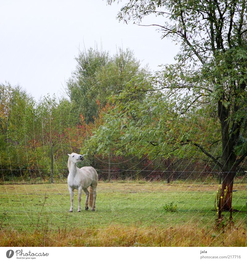 Nature Sky White Tree Green Plant Animal Autumn Grass Movement Horse Bushes Pasture Fence Gray (horse) To feed