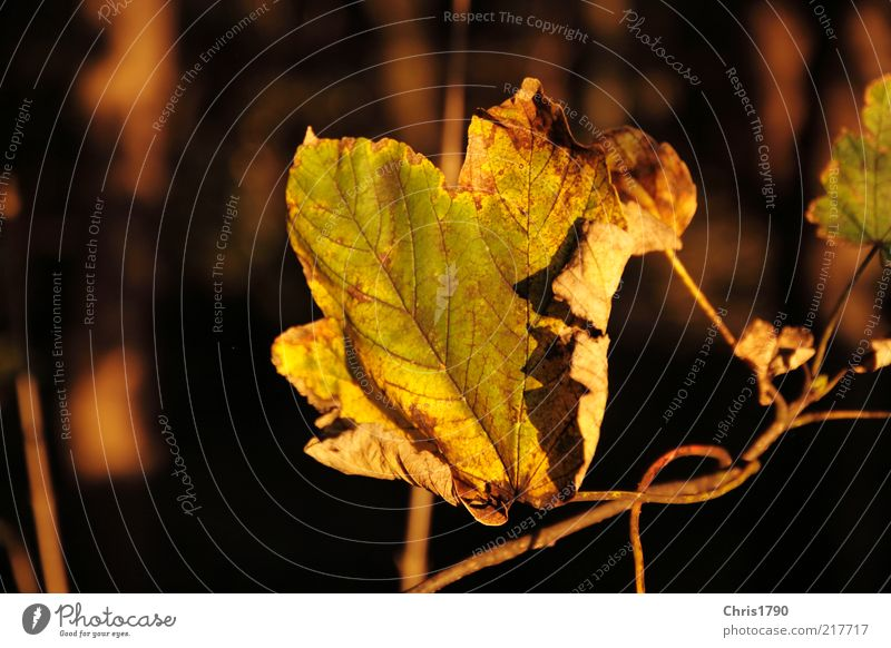Nature Beautiful Old Green Plant Leaf Autumn Freedom Sadness Moody Gold Earth Authentic Peace Change Natural