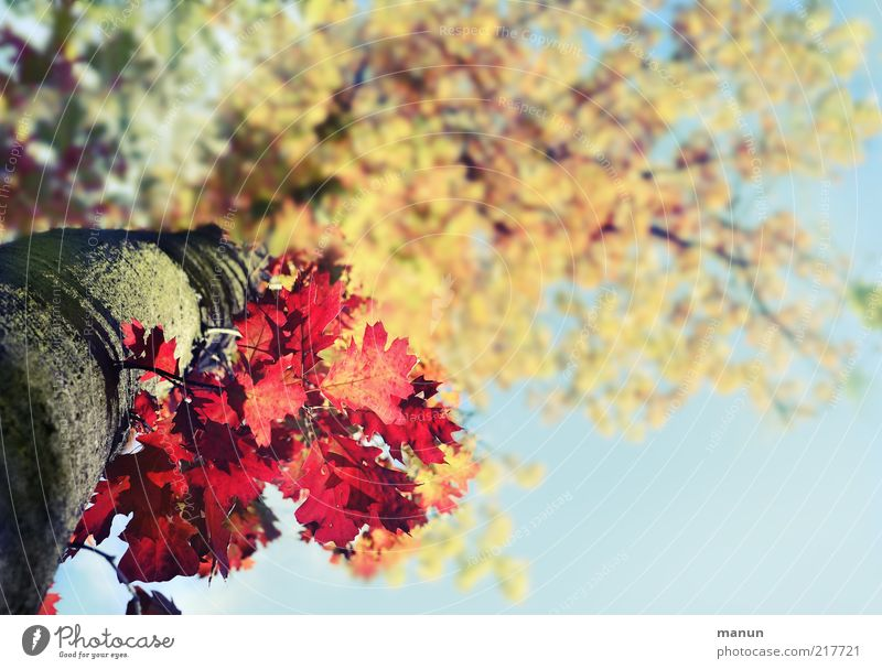 Nature Beautiful Tree Leaf Autumn Above Environment Fresh Change Uniqueness Natural Exceptional Tree trunk Beautiful weather Blue sky Original