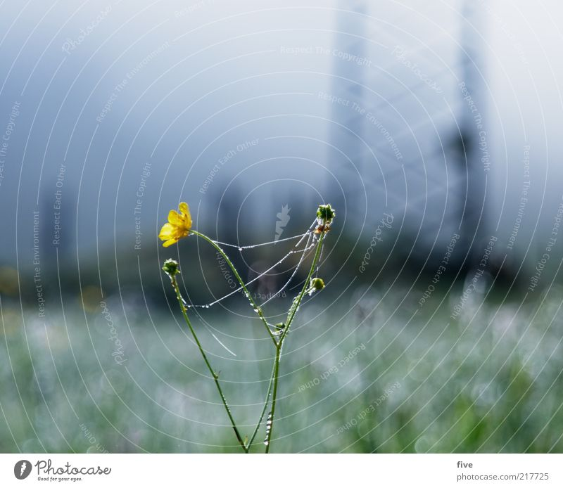 Nature Water Sky Flower Plant Yellow Cold Meadow Autumn Grass Landscape Field Fog Environment Drops of water Dew