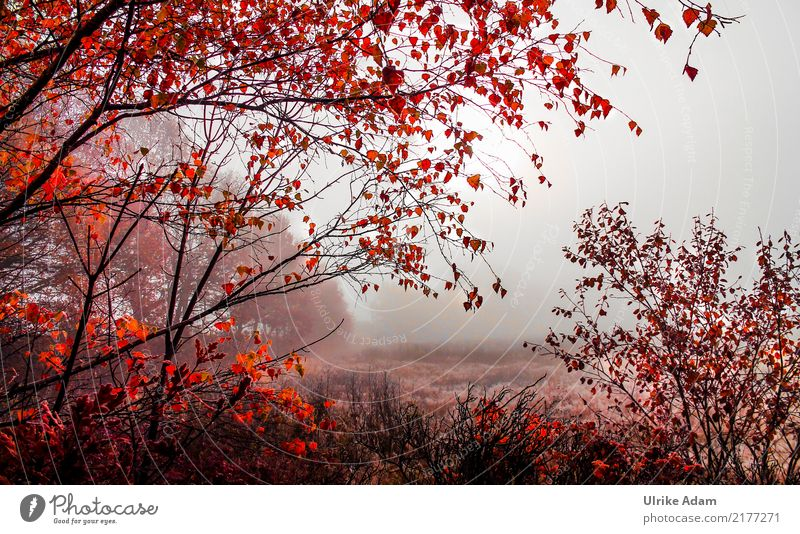 Nature Tree Landscape Red Relaxation Leaf Calm Forest Autumn Interior design Design Orange Contentment Illuminate Fog Decoration