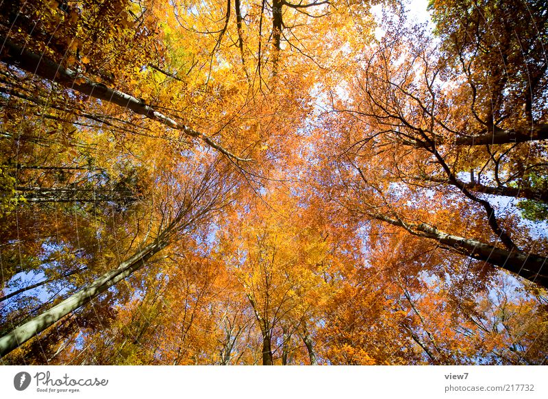 October Environment Nature Plant Sky Tree Leaf Forest Esthetic Authentic Simple Natural Many Brown Multicoloured Yellow Calm Autumn Leaf canopy Autumnal