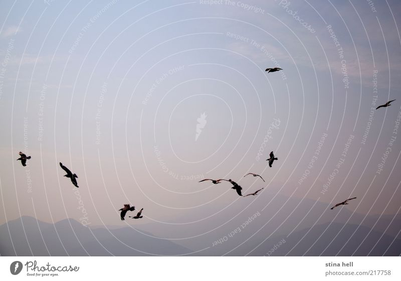SEAGULLS Sky Nature Vacation & Travel Beautiful Summer Landscape Animal Freedom Horizon Esthetic Happiness Island Joie de vivre (Vitality) Beautiful weather