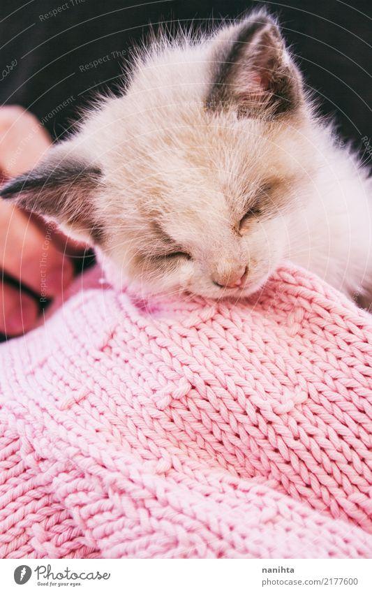 Lovely sleeping kitty Animal Pet Cat Animal face 1 Baby animal Wool Wool sweater Hand Sleep Dream Friendliness Beautiful Cute Pink Black White Emotions Moody