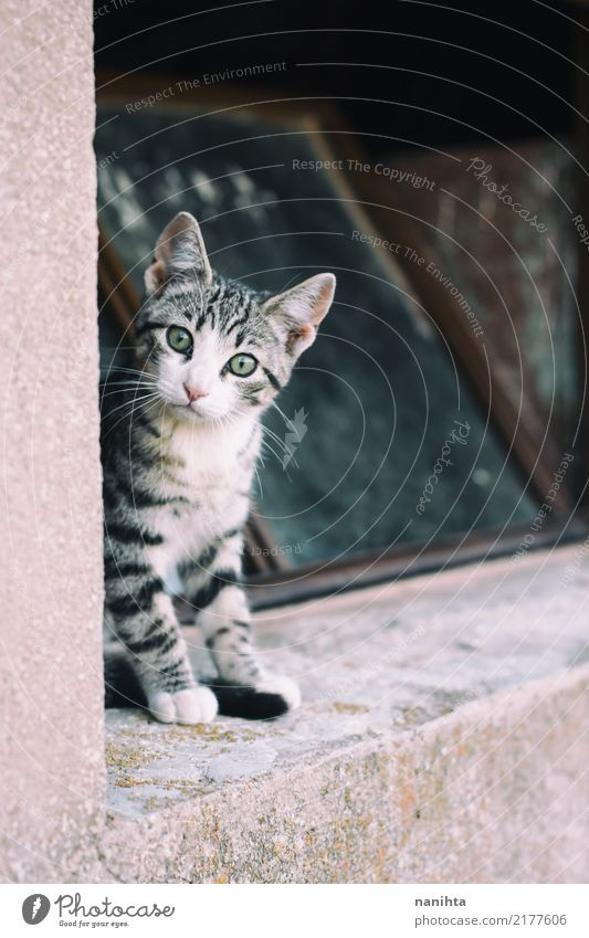 Little curious cat Window Wall (barrier) Wall (building) Animal Pet Cat Animal face 1 Baby animal Observe Sit Authentic Free Small Astute Curiosity Cute Brown