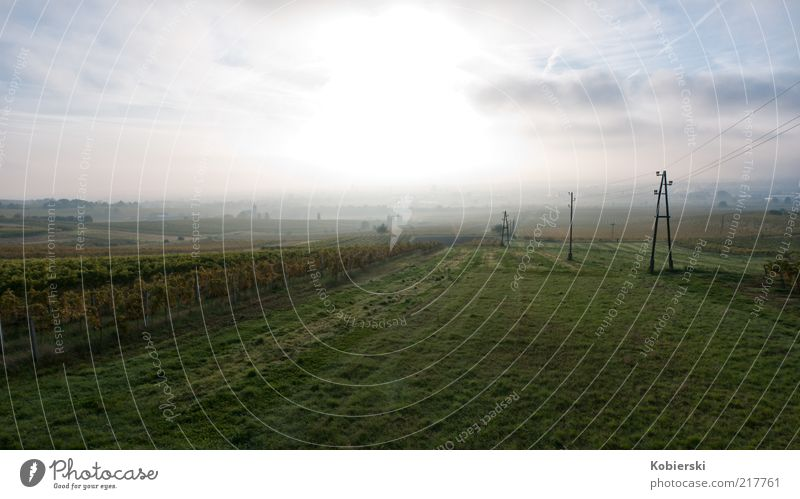 Morning at the vineyard Clouds Beautiful weather Fog Vineyard Discover To enjoy Illuminate Free Fresh Sustainability Positive Blue Yellow Green Contentment