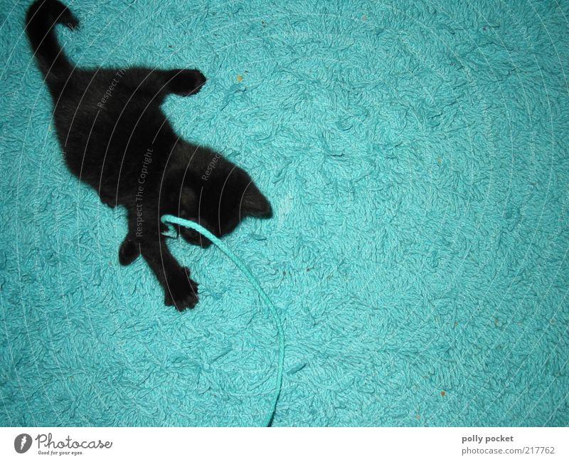 play instinct Playing Turquoise Carpet Animal Pet Cat Black 1 Baby animal Movement Hunting Fight Romp Brash Cute Crazy Blue Joy Enthusiasm Love of animals Life