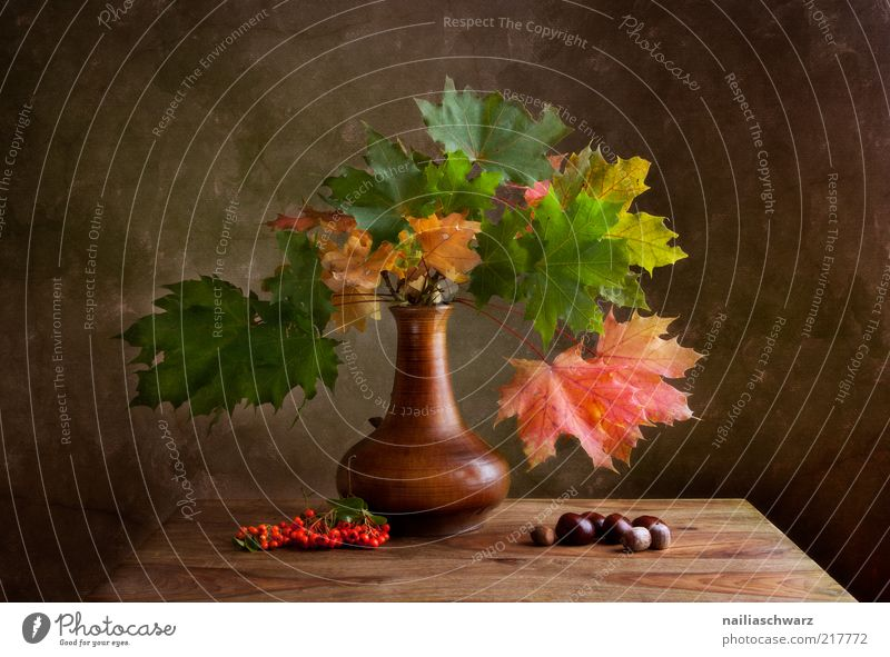Nature Old Green Plant Red Yellow Autumn Wood Stone Brown Art Gold Esthetic Idyll Painting and drawing (object) Still Life