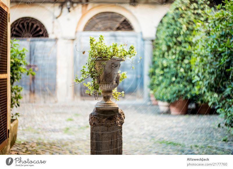 old vase with plant on a backyard Day Deserted Courtyard Backyard Vase Flowerpot stone pot Plant Foliage plant Decoration