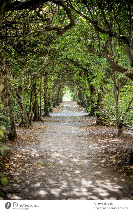 Nature Summer Green Tree Relaxation Loneliness Calm Forest Lanes & trails Trip Park Romance Mysterious Tunnel Corridor Jinxed