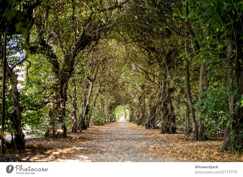 Nature Summer Green White Tree Relaxation Loneliness Calm Forest Lanes & trails Trip Park Romance Mysterious Tunnel Corridor