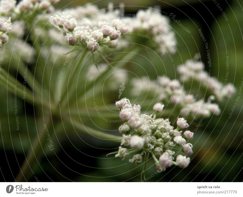 morning dew Life Fragrance Nature Plant Drops of water Autumn Flower Blossom Foliage plant Wild plant Breathe Blossoming Illuminate Faded Green White Calm Hope