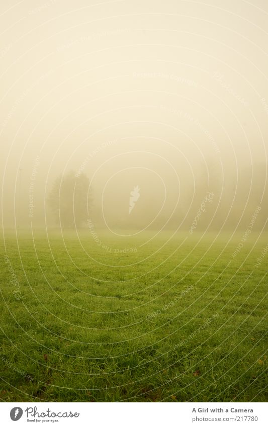 Nature White Green Beautiful Tree Calm Cold Landscape Environment Grass Dream Field Contentment Fog Natural Infinity