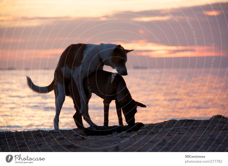 Sky Water Vacation & Travel Ocean Beach Joy Animal Life Dog Emotions Happy Sand Coast Moody Pair of animals Beautiful weather