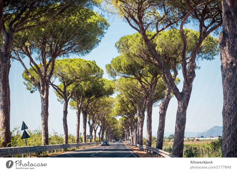 Alley in Tuscany 2 Relaxation Calm Trip Summer Nature Tree Forest Street Car Driving Hot Green White Romance Loneliness Summery Avenue Italy road trip Sequence