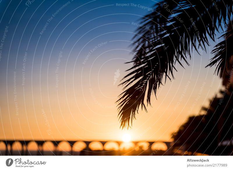 holiday kitsch Twilight Sunset Back-light Silhouette Far-off places Freedom Summer Summer vacation Horizon Maritime Blue Orange Relaxation Palm tree Leaf Island