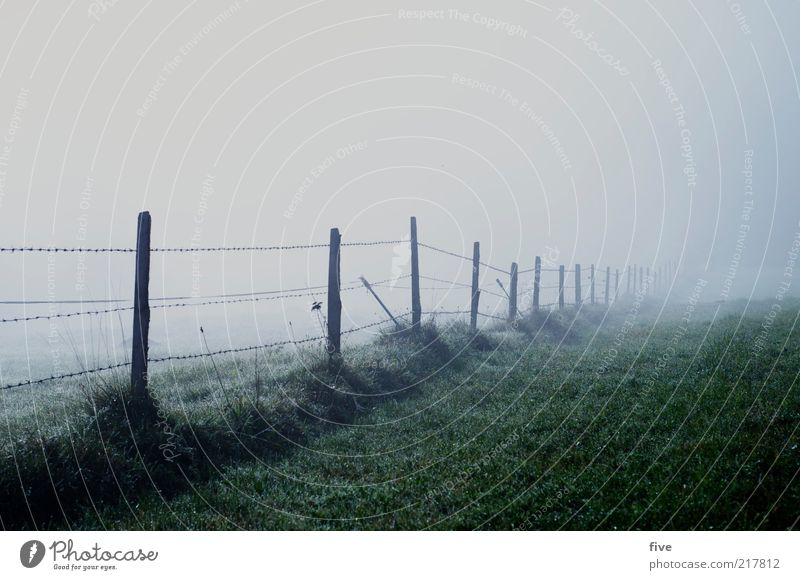 Nature Plant Dark Cold Meadow Autumn Grass Landscape Field Fog Environment Fence Wire Eerie Foliage plant Bad weather