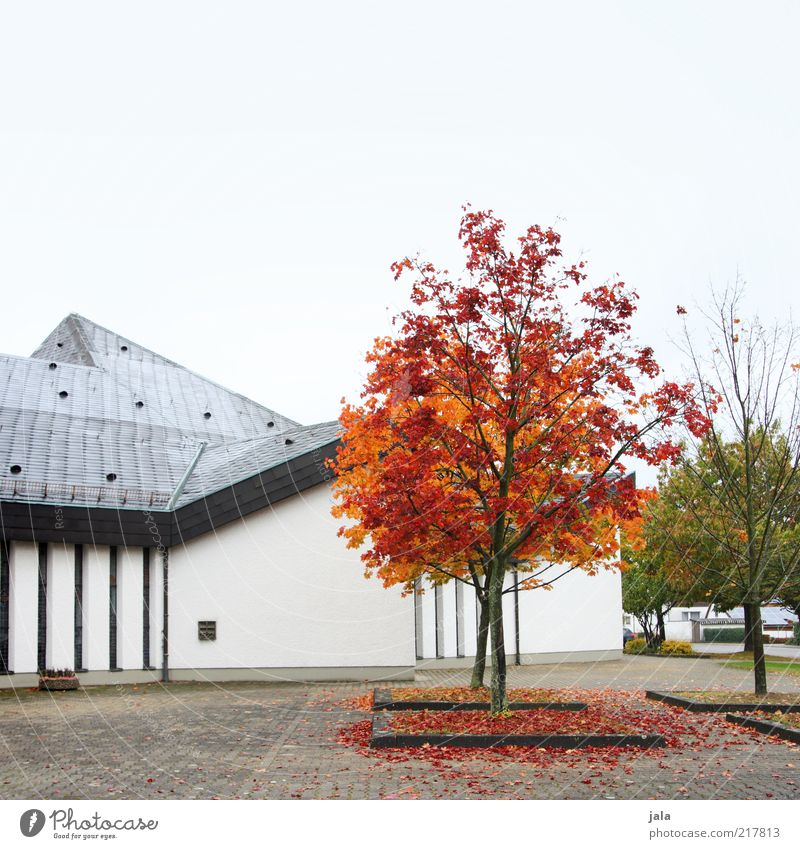 red-leaf Sky Autumn Tree House (Residential Structure) Places Manmade structures Building Architecture Wall (barrier) Wall (building) Facade Roof Gloomy Gray