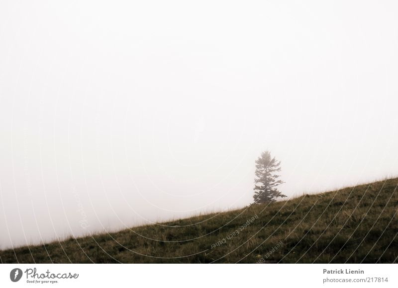 alpine view Environment Nature Landscape Plant Elements Air Sky Autumn Climate Weather Bad weather Fog Tree Wild plant Going Black Forest Loneliness Bright