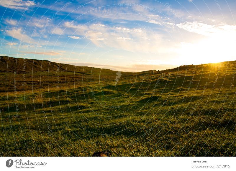 Sunset Far-off places Freedom Nature Landscape Plant Earth Sky Clouds Horizon Sunrise Sunlight Autumn Beautiful weather Grass Meadow Hill Old Infinity Blue
