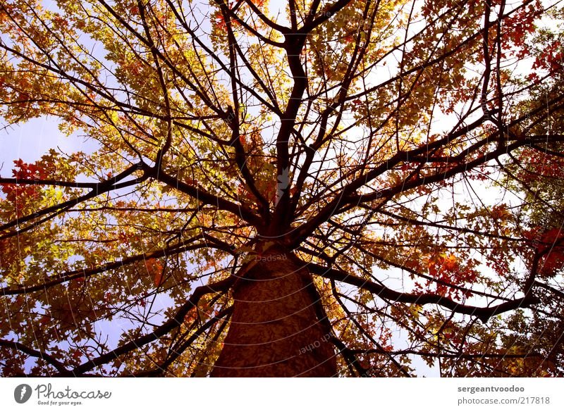 Nature Sky Tree Plant Leaf Forest Autumn Moody Weather Environment Free Tall Fresh Happiness Esthetic Authentic