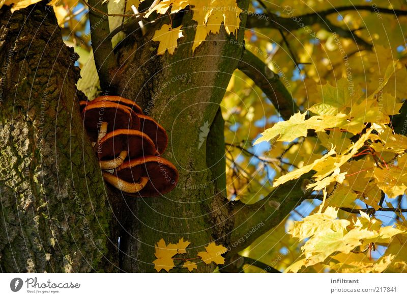 Nature Tree Plant Calm Black Yellow Life Autumn Brown Gold Esthetic Natural Mushroom Beautiful weather Blue sky Tree bark