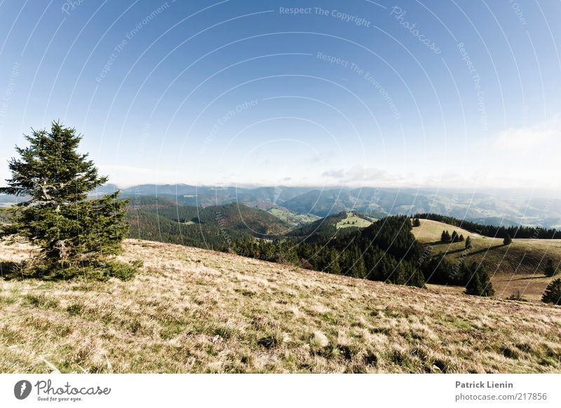 farsightedness Environment Nature Landscape Plant Elements Air Cloudless sky Autumn Climate Weather Beautiful weather Tree Grass Forest Hill Mountain Looking