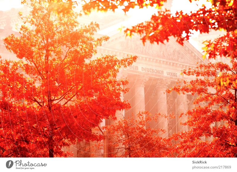 Nature Tree Red Leaf Berlin Autumn Building Warmth Architecture Germany Facade Culture Manmade structures Landmark Politics and state