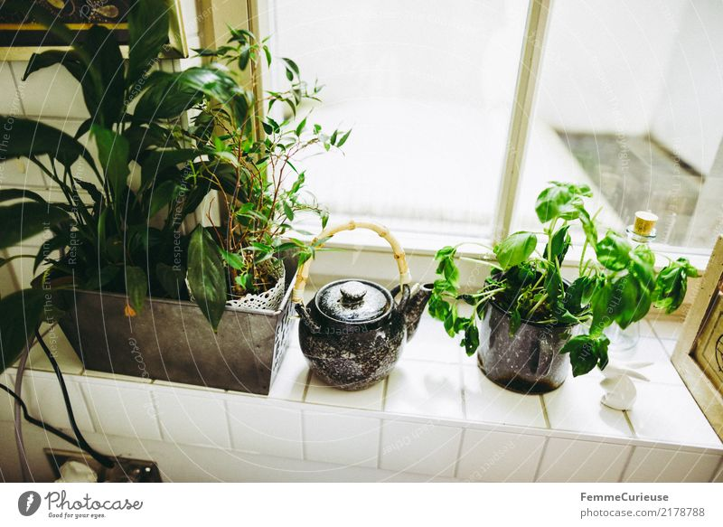 Home_04 Plant Agricultural crop Pot plant Living or residing Herbs and spices Herb garden Basil Teapot Window board Tile Kitchen Decoration Flat (apartment)