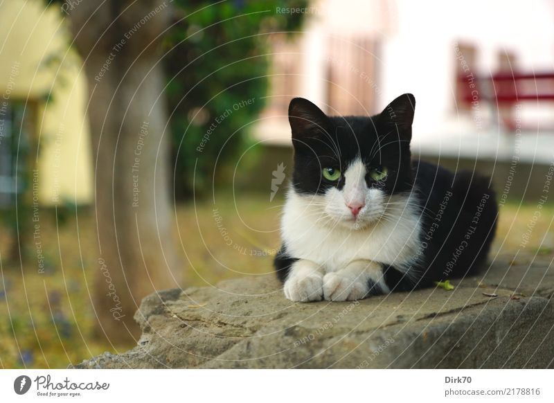 cool cat Tree Garden Park Thessaloniki Greece Town Old town Deserted House (Residential Structure) Wall (barrier) Wall (building) Facade Animal Pet Cat