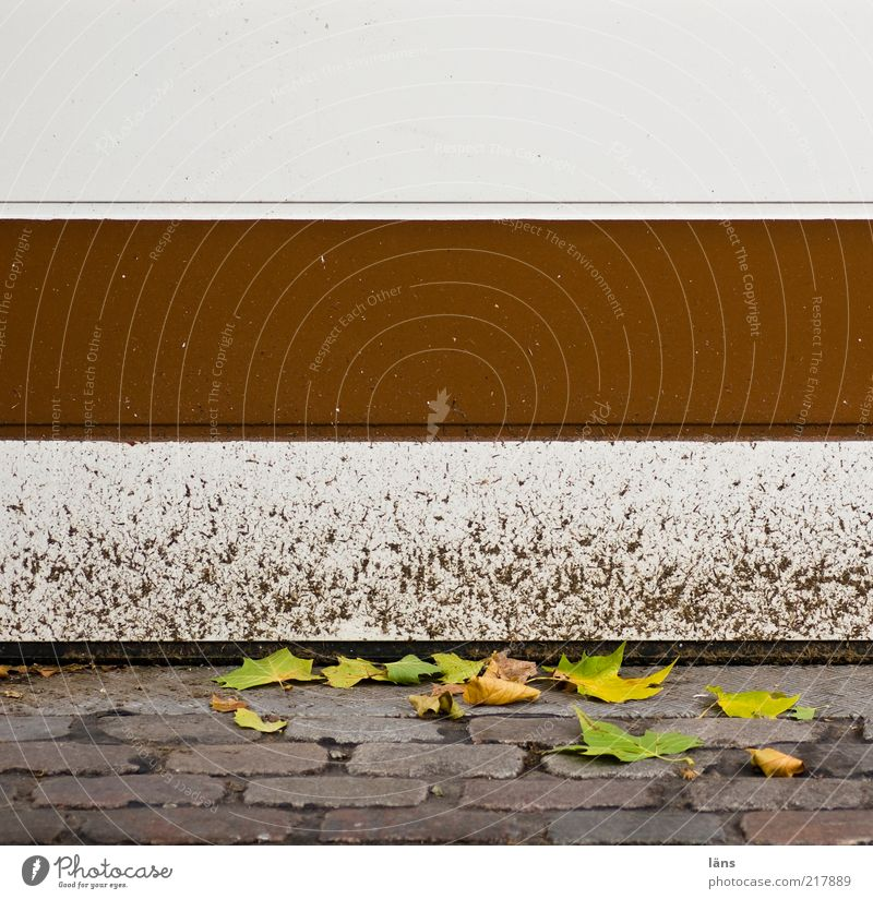 White Leaf Autumn Lanes & trails Stone Metal Brown Dirty Closed Cobblestones Autumn leaves Varnish Highway ramp (entrance) Copy Space left Plant