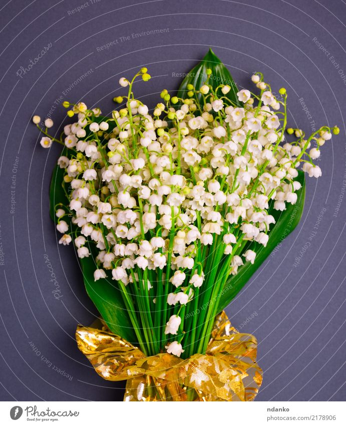 bouquet of blossoming lilies of the valley Beautiful Summer Garden Plant Flower Leaf Blossom Bouquet Blossoming Fresh Natural Green Black White Valley spring