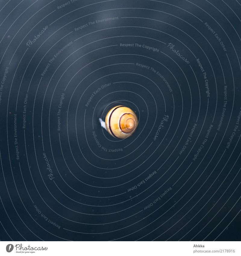 Yellow snail shell swimming in dark water Playing Elements Water Snail Small Round Black Trust Safety (feeling of) Love of animals Modest Uniqueness End