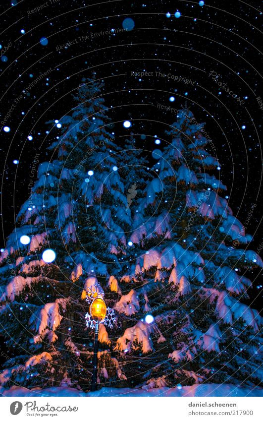 O Christmas tree Winter Snow Climate Ice Frost Snowfall Tree Blue Fir tree Snowflake Night Flash photo Shadow Deserted Reflection Dark Illuminate Enchanting