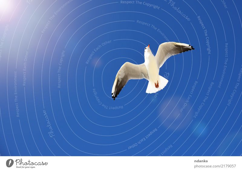 white sea gull Freedom Summer Sun Nature Animal Sky Bird Fly 1 Movement Wild Blue White Feather soar background Story Seagull wildlife wing Sea bird Height