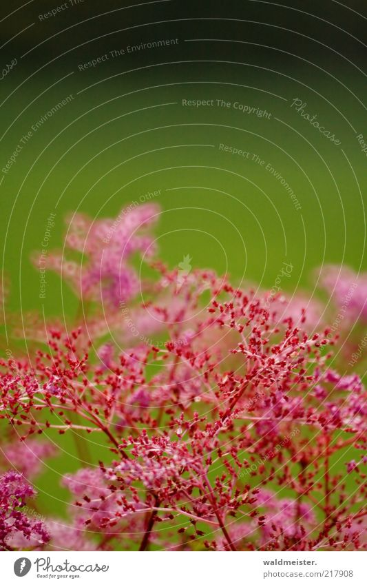 Nature Flower Green Plant Black Pink Esthetic Growth Delicate Blossoming Optimism Catadioptric system (effect)