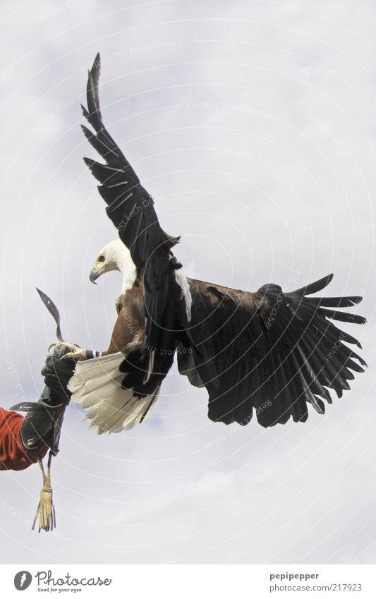 Human being Sky Beautiful Clouds Animal Air Weather Bird Power Arm Elegant Flying Esthetic Speed Wild animal Wing