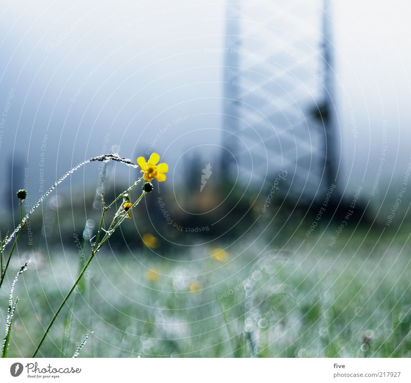 going at the wild emperor Environment Nature Sky Autumn Bad weather Fog Plant Flower Grass Meadow Alps Cold Dew Electricity pylon Colour photo Exterior shot