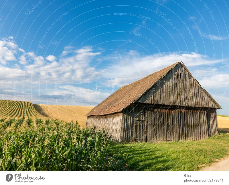 Barn takes late sunbathing Vacation & Travel Tourism Trip Cycling tour Summer vacation Hiking cycling holiday Culture Country life Agriculture Nature Landscape