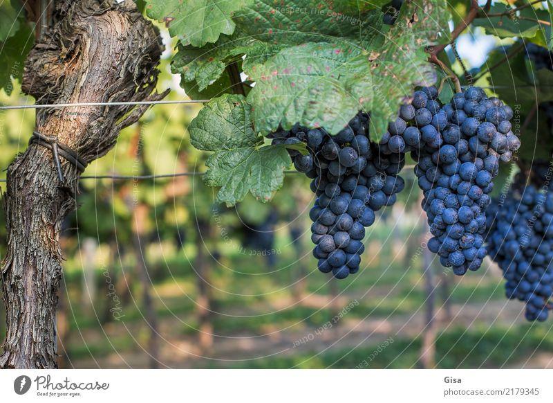 Nature Plant Blue Green Landscape Red Autumn Food Feasts & Celebrations Brown Fruit Nutrition Joie de vivre (Vitality) Uniqueness Climate Round