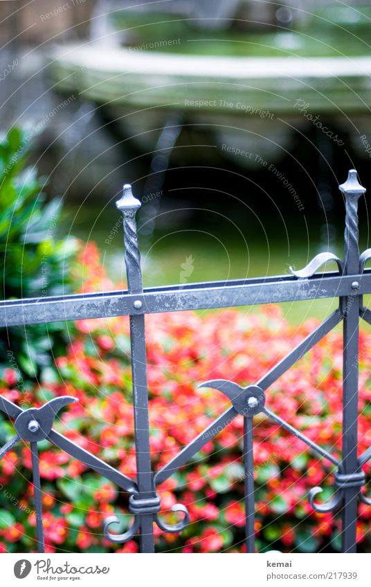 Water Old Flower Green Plant Red Wet Drops of water Decoration Point Well Cologne Monument Fence Flow Tourist Attraction